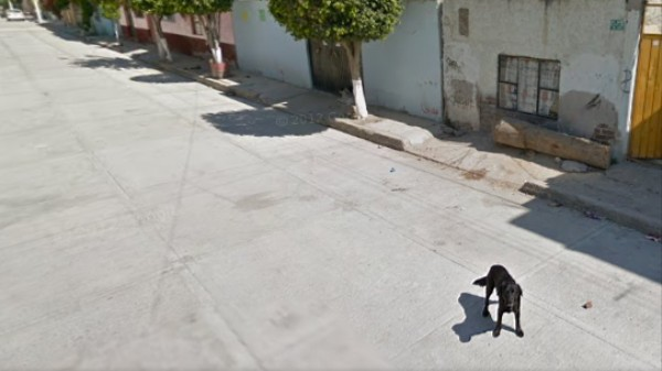 The Dogs of Google Street View