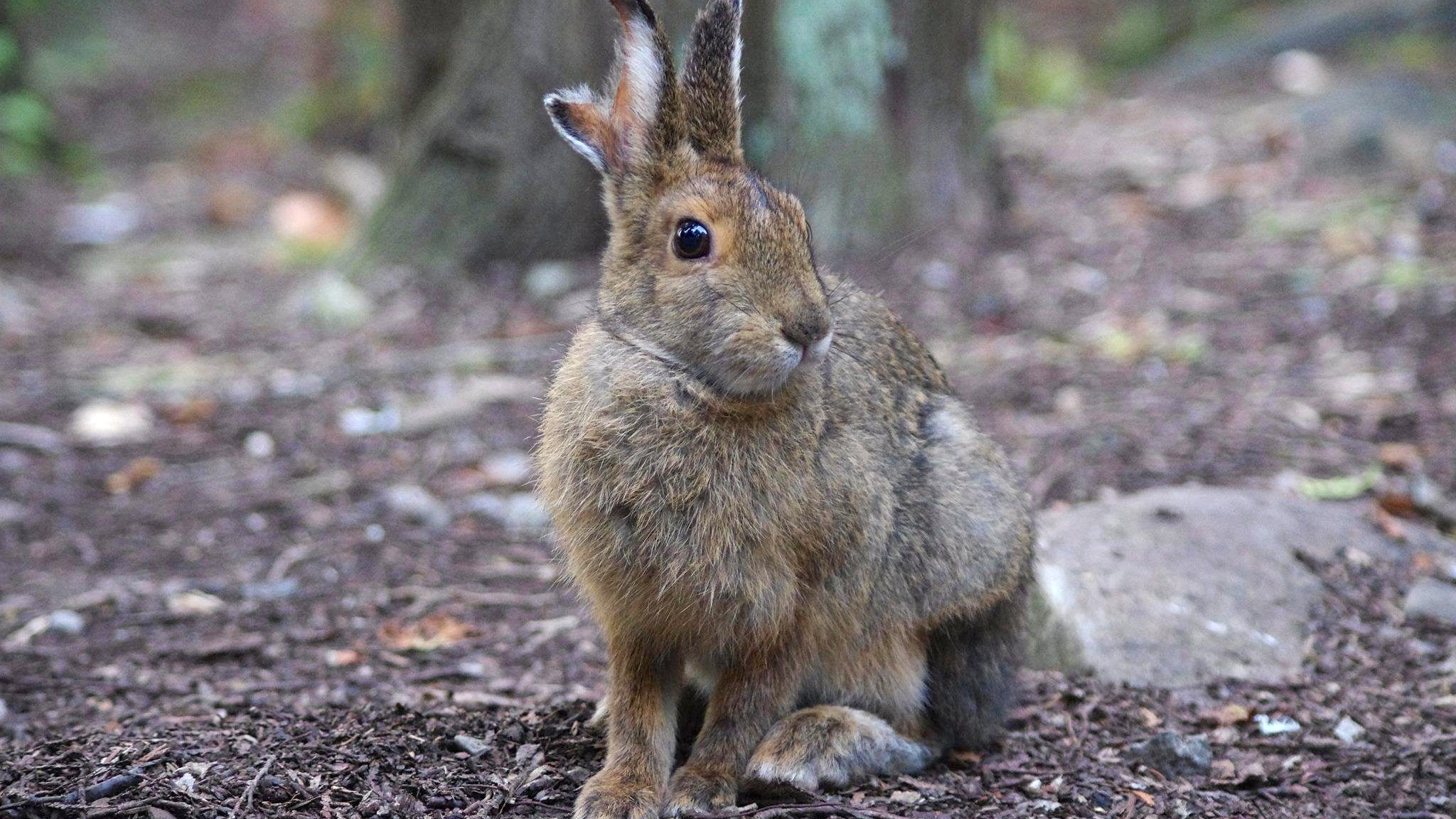 Is This Four-Eared 'Jackalope' Bunny a Nuclear Mutant? We Asked a Park Ranger