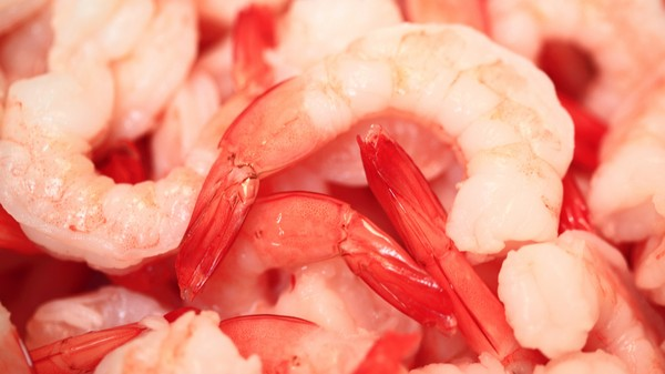 Lab-Grown Shrimp Is Silicon Valley's Latest, and Most Ambitious, Frankenfood