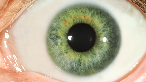 Two New Techniques Get Us Closer to Regenerating Eyeballs