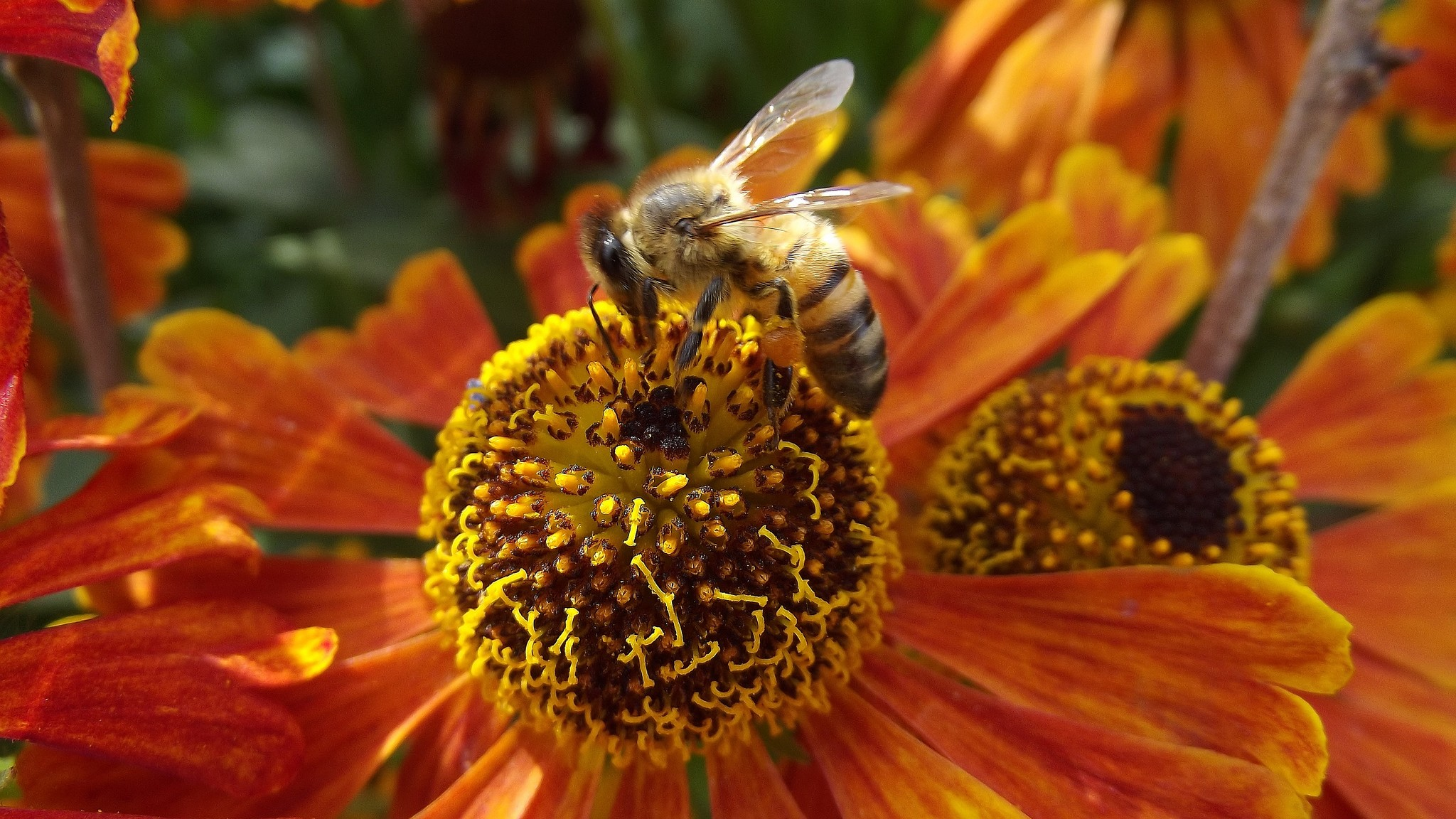Bee Populations Seem To Be Bouncing Back In Canada, But Not in the US