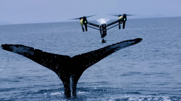 Biologists Are Now Collecting Whale Snot With Drones