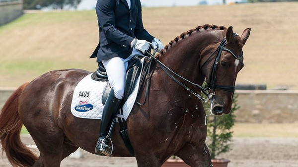 Why Is Dressage Still an Olympic Sport?