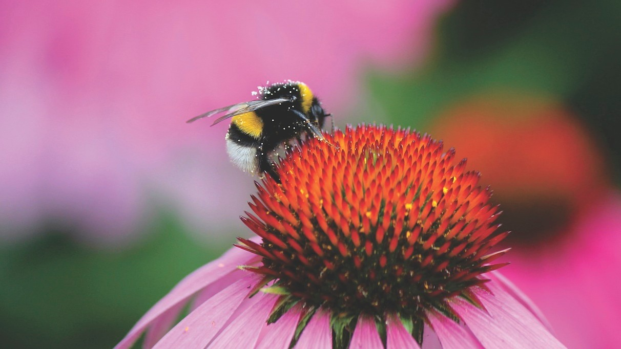 Bees Can Count to Four, Display Emotions, and Teach Each Other New Skills