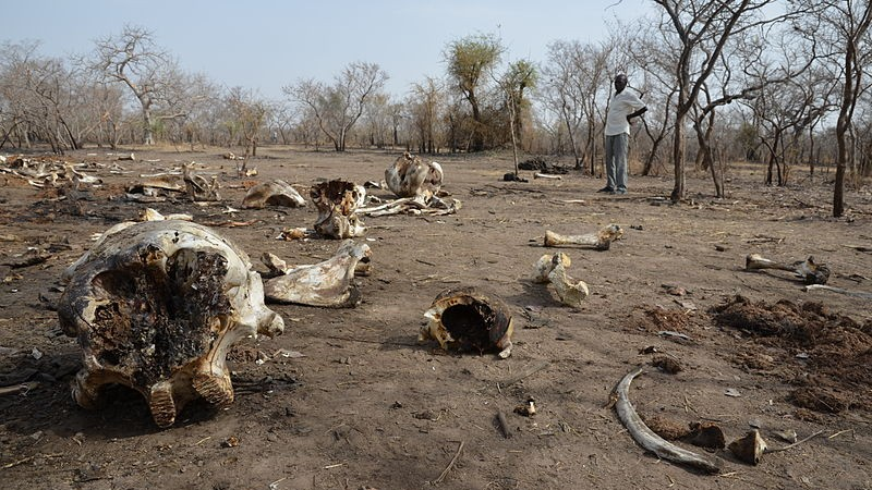 Elephant Poaching Is Costing African Countries $25 Million Every Year