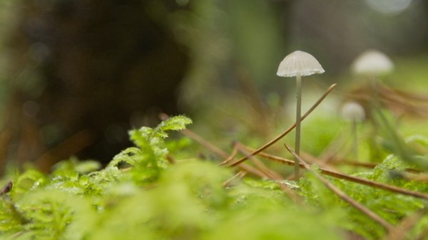 How Mushrooms Could Help Replenish Forests After Clearcut Logging