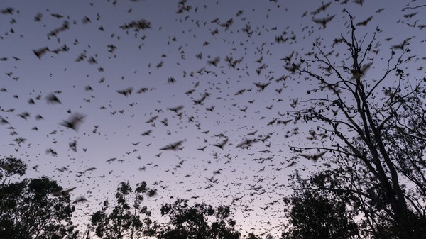 Ecological Impact Assessments Aren't Protecting Bats from Wind Farms