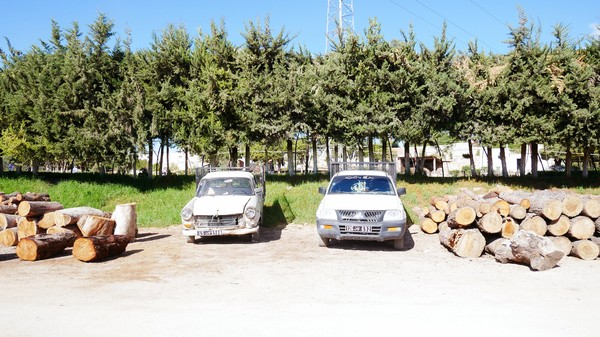 Illegal Trees: The Tunisian Smuggling Racket You've Never Heard Of