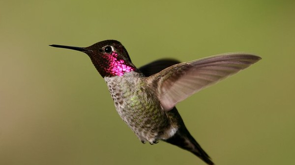 The Mighty Hummingbird Can Perceive Motion From Every Angle