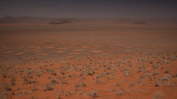 Ecologists Offer New Explanation for Mysterious Namibian Fairy Circles