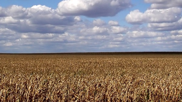 Is It Finally Game Over for Ethanol?