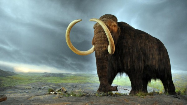 The First Pair of Complete Woolly Mammoth Genomes Is a Big Boost for Cloners