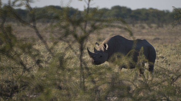 3D-Printed Rhino Horns Are Not the Solution to the Poaching Crisis, Experts Say