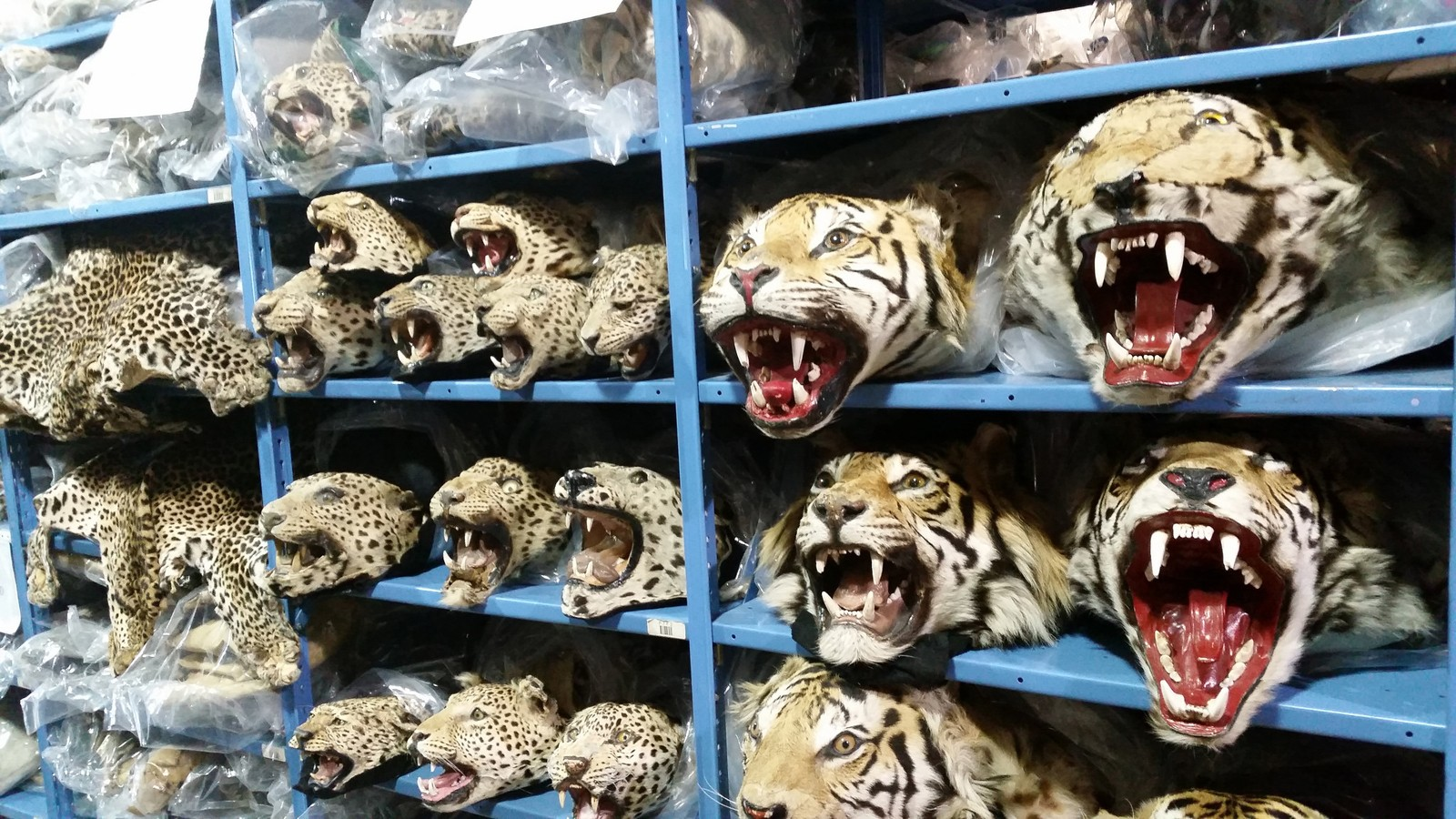 Facebook Is a Black Market For Vietnam's Wildlife Traffickers