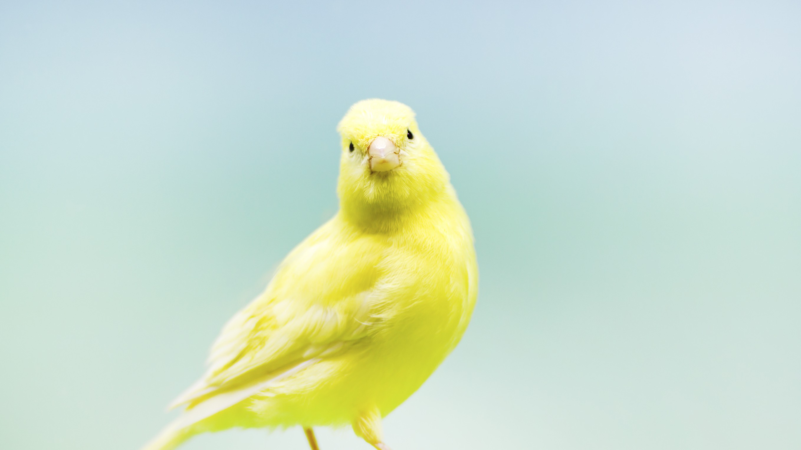 Warrant Canary for Activist Email Service Riseup Seemingly Expires