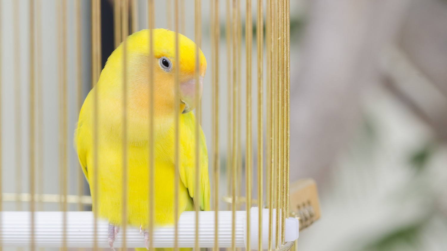 Dark Web Child Porn Sites Are Using 'Warrant Canaries'