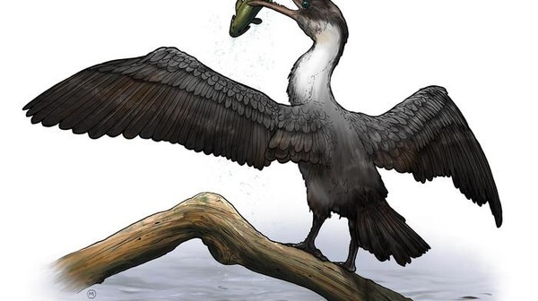 This Cretaceous Bird Lived at a Time When the Arctic Was Almost Tropical
