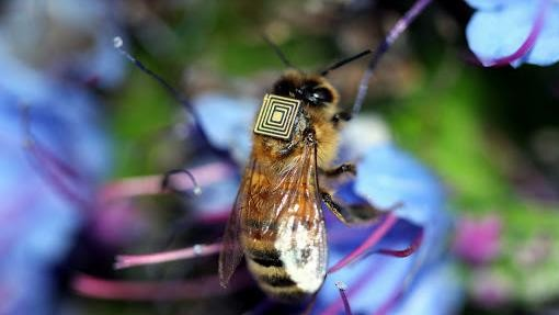 Honey Bees Are Mapping Their Movements with Tiny Sensor Backpacks
