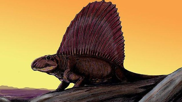Dimetrodon, the Solar-Powered, Sail-Backed Scourge Before the Dinosaurs