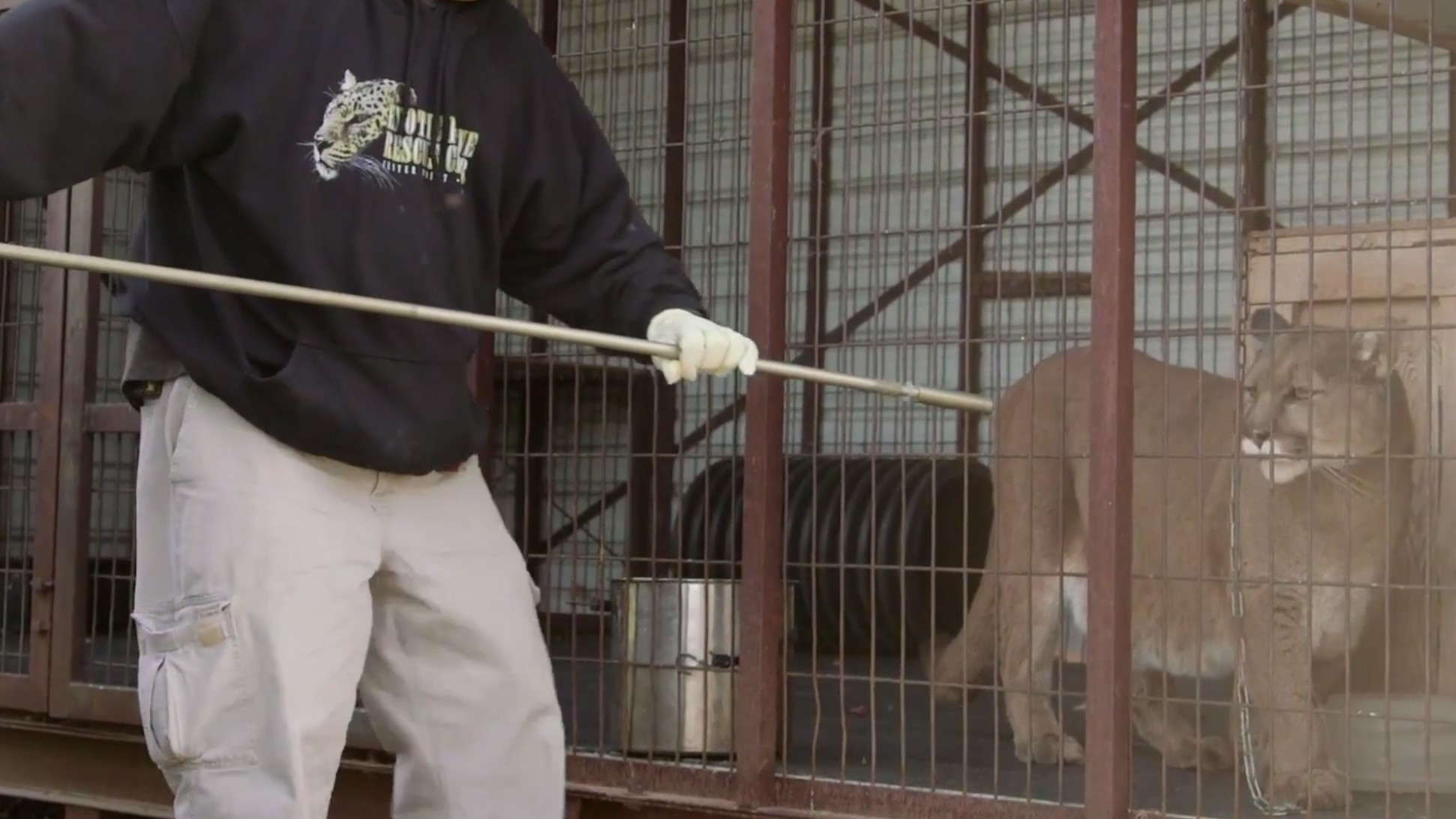 An Inside Look at America's Exotic Animal Trade