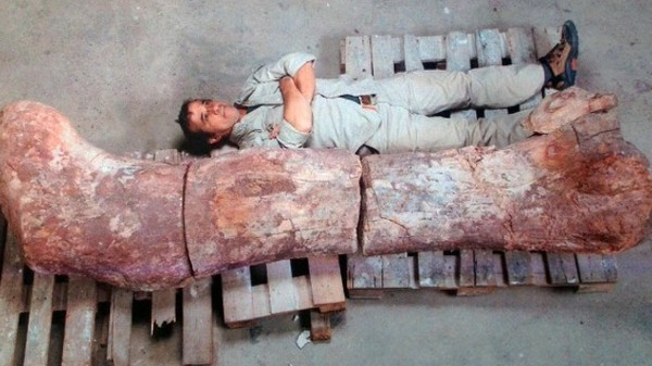 The Largest Dinosaur Ever Unearthed May Not Actually Be the Largest