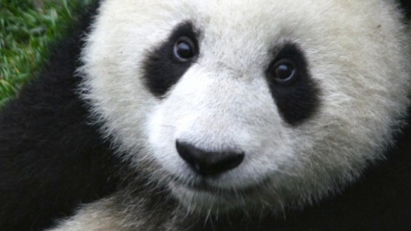 China's 'Putter Panda' Cyber-Spies Have Been Hacking the US Aerospace Industry