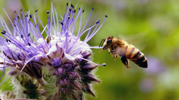 Bees Are More Crucial to Modern Agriculture Than Fertilizer