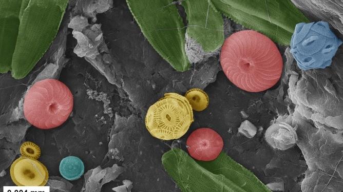 De plasticsoep biedt onderdak aan een verrassend grote variëteit aan leven