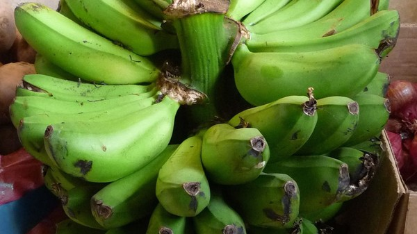 Genetically Modified 'Super-Bananas' Are Being Tested in the US