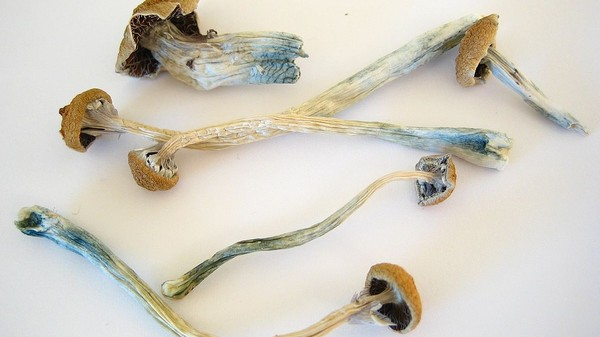 Mushroom Tripping Is a Lot Like Dreaming, Biologically Speaking