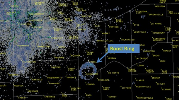Why Birds Make Weird Circles on Weather Radars