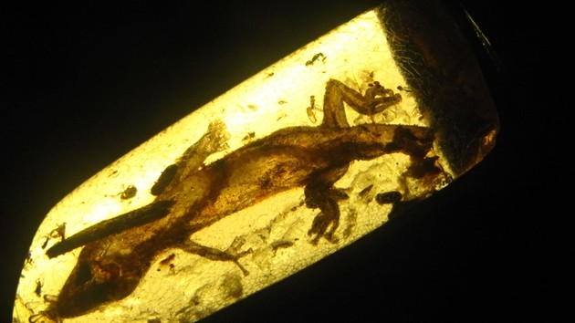 A Tour of the Ancient Life Still Trapped in Amber