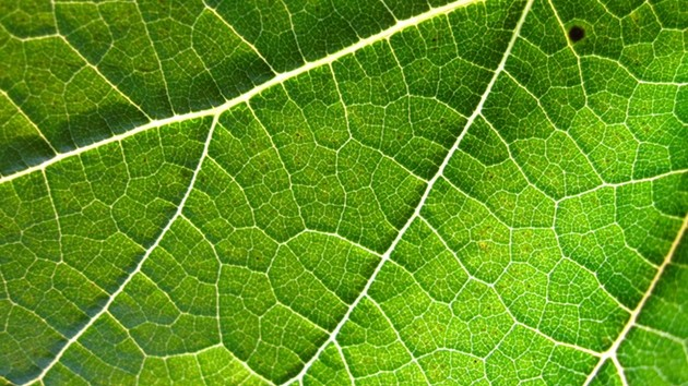 Why Use Artificial Leaves in Space When Real Leaves Work Just Fine?