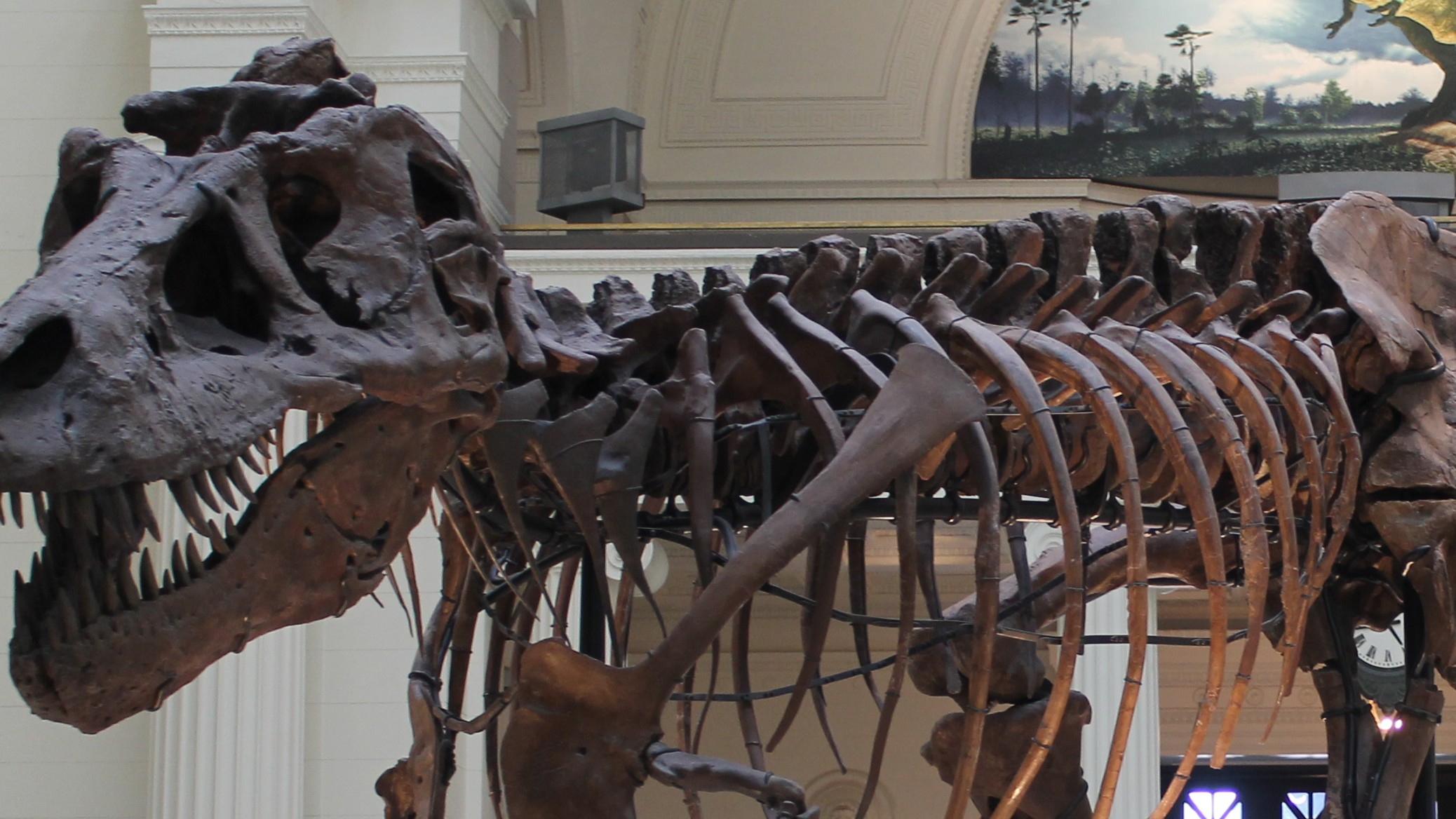 The Oldest and Largest T-Rex Ever Discovered Is Also Kind Of Cursed
