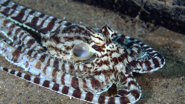This Next-Gen Cloaking Material Is Made of Synthetic Octopus Skin