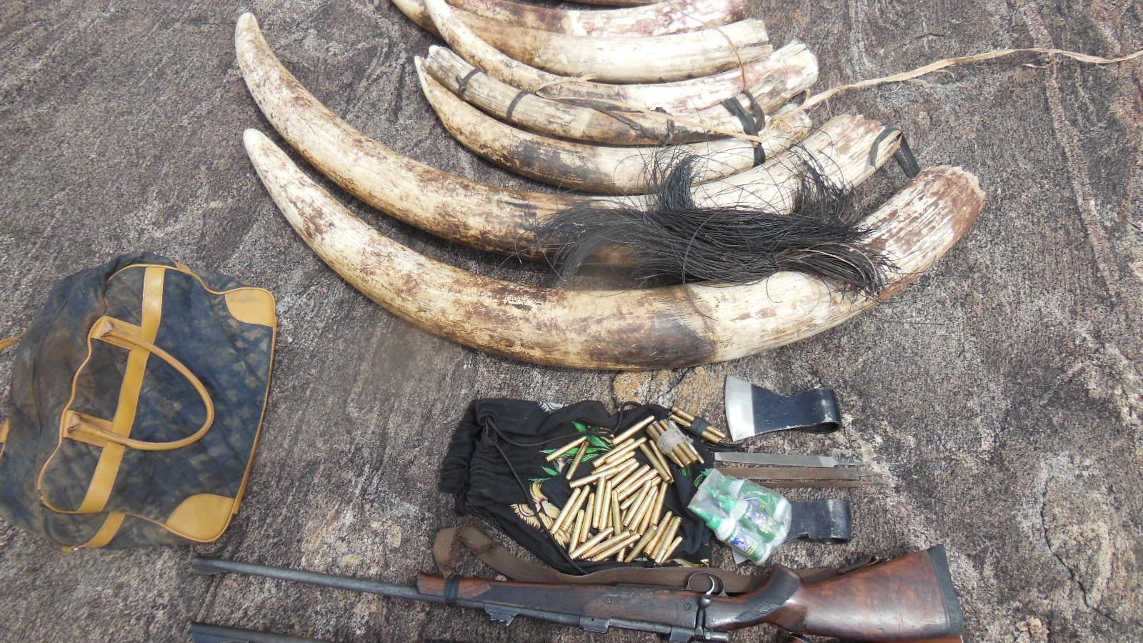 The War on Poaching Is Just Like the War on Drugs
