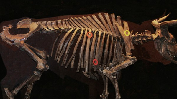 The Plan to Bring Back Extinct Animals, Without Cloning