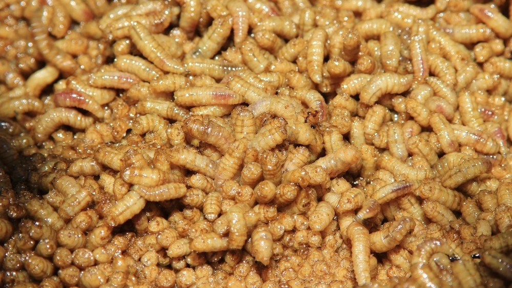 Turns Out a Pile of Writhing Maggots Sounds a Lot Like a Hot Casserole
