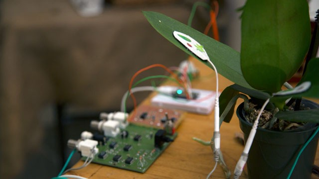 The Exquisite Sounds of Plants