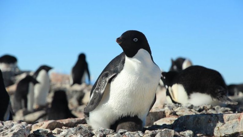 I Do Armchair Penguinology for Science, and So Can You