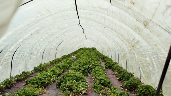Organic Farming Is Going to Save You Money