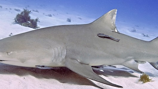 Sharks Have Distinct Personalities to Go Along With Their Unwavering Bloodlust