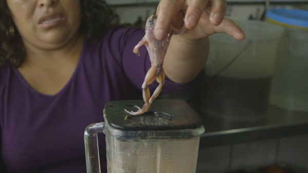 Peru's Erection Vendors Are Driving the Scrotum Frog to Extinction