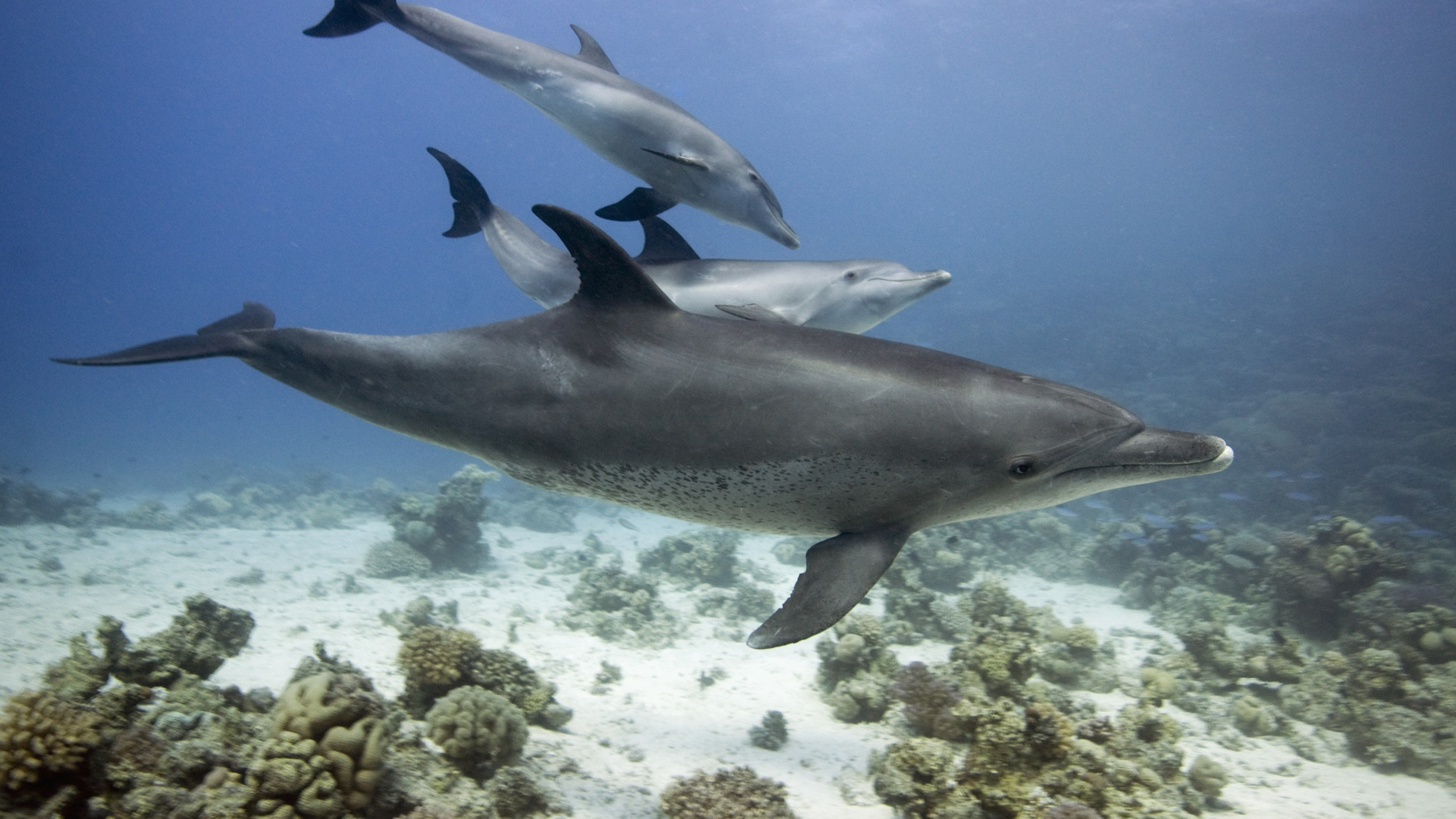 This Dolphin Breathalyzer Hopes to Find Disease, Not Booze