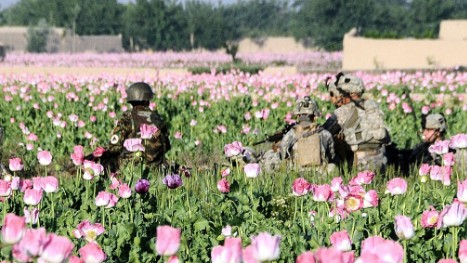 How Afghanistan's Opium Trade Survived a $7.6 Billion Assault