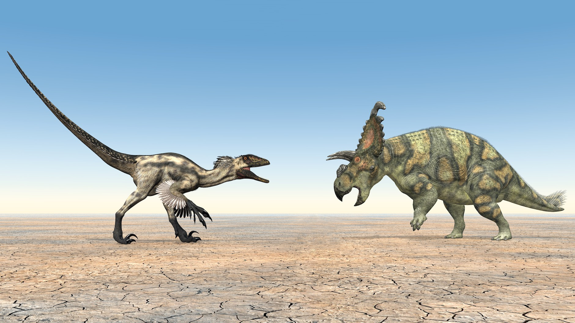 ​The Contentious Science of Dinosaur Brawls