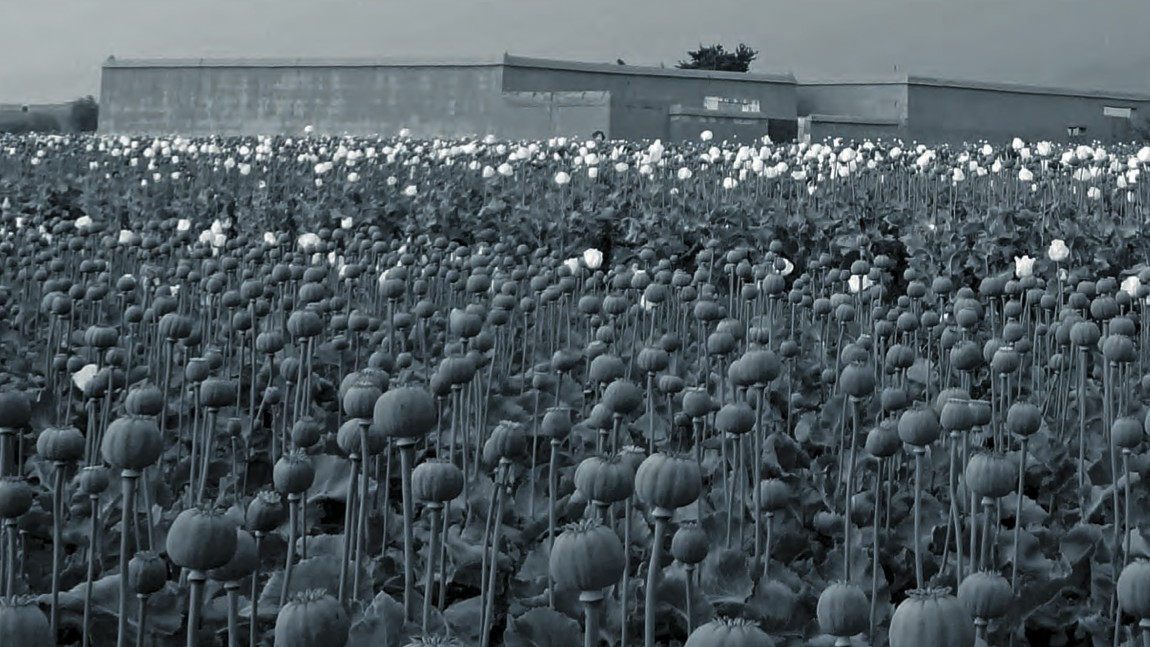 How Opium Cartels Are Derailing Afghanistan's Reconstruction
