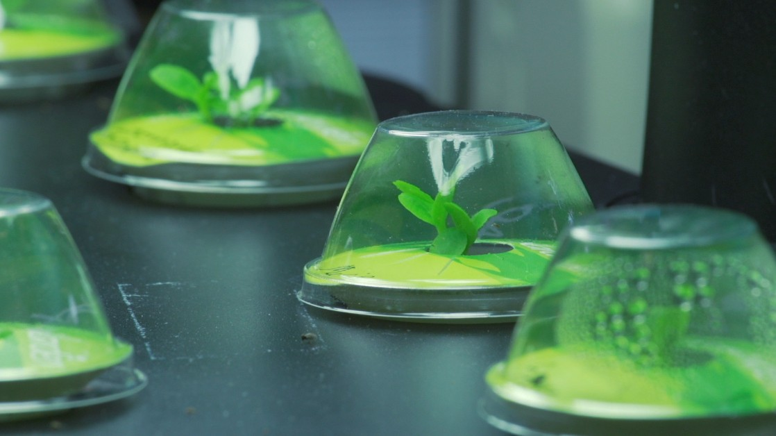 Meet the Gardening Robot that Could Grow Fresh Food for Astronauts