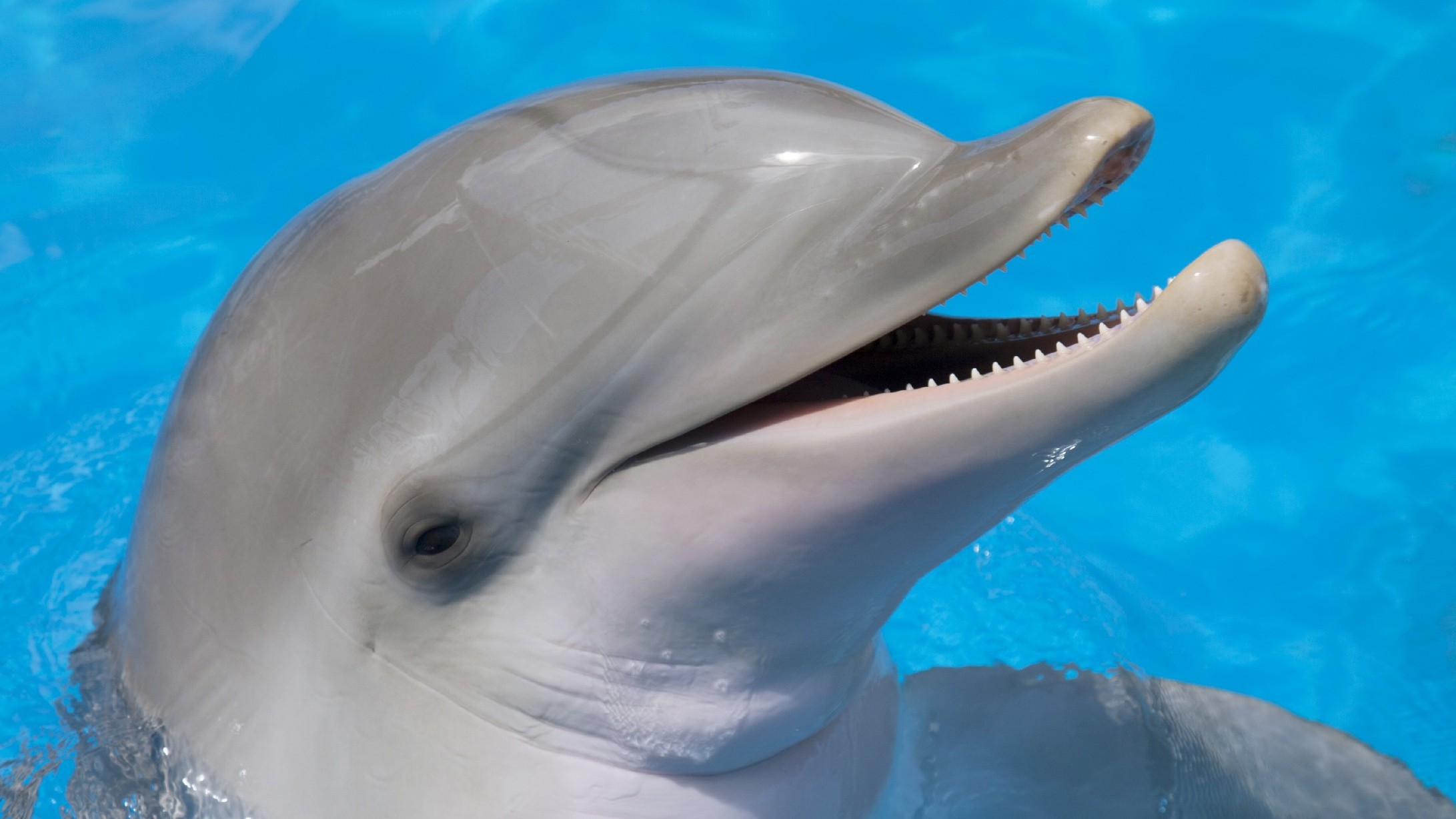 Can Swimming with Dolphins Really Cure Your Meth Addiction?