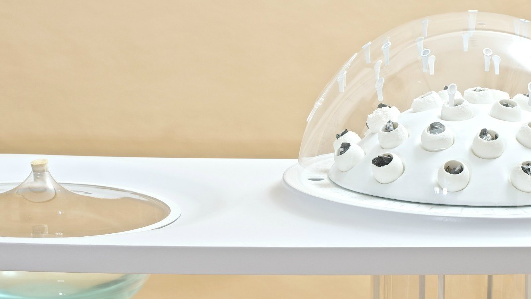 This Device Turns Plastic Trash Into Edible Mushrooms